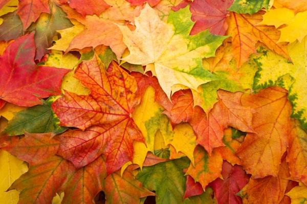 Protegido: Conociendo el otoño